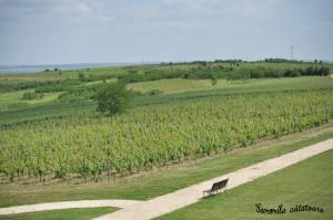Romanian vineyard